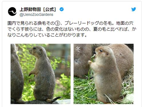 上野動物園公式のプレーリードッグの夏冬