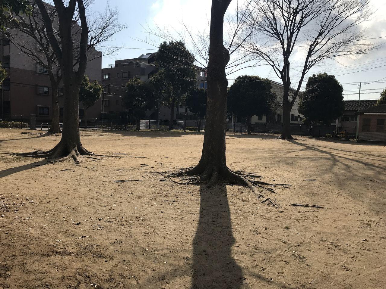 南行徳の満世公園の木