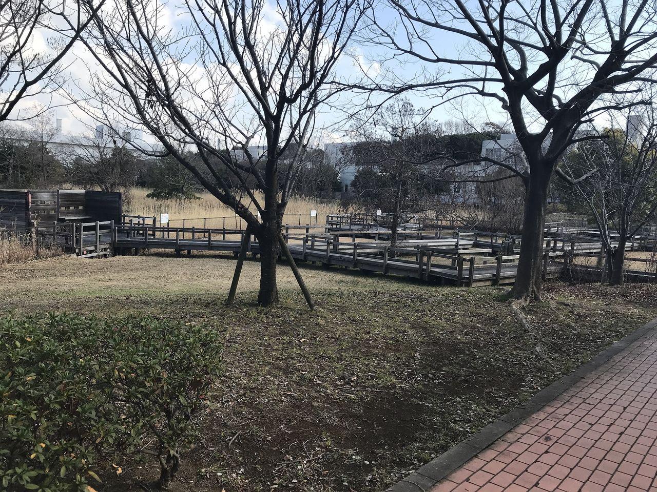 南行徳のいこいの広場の木立