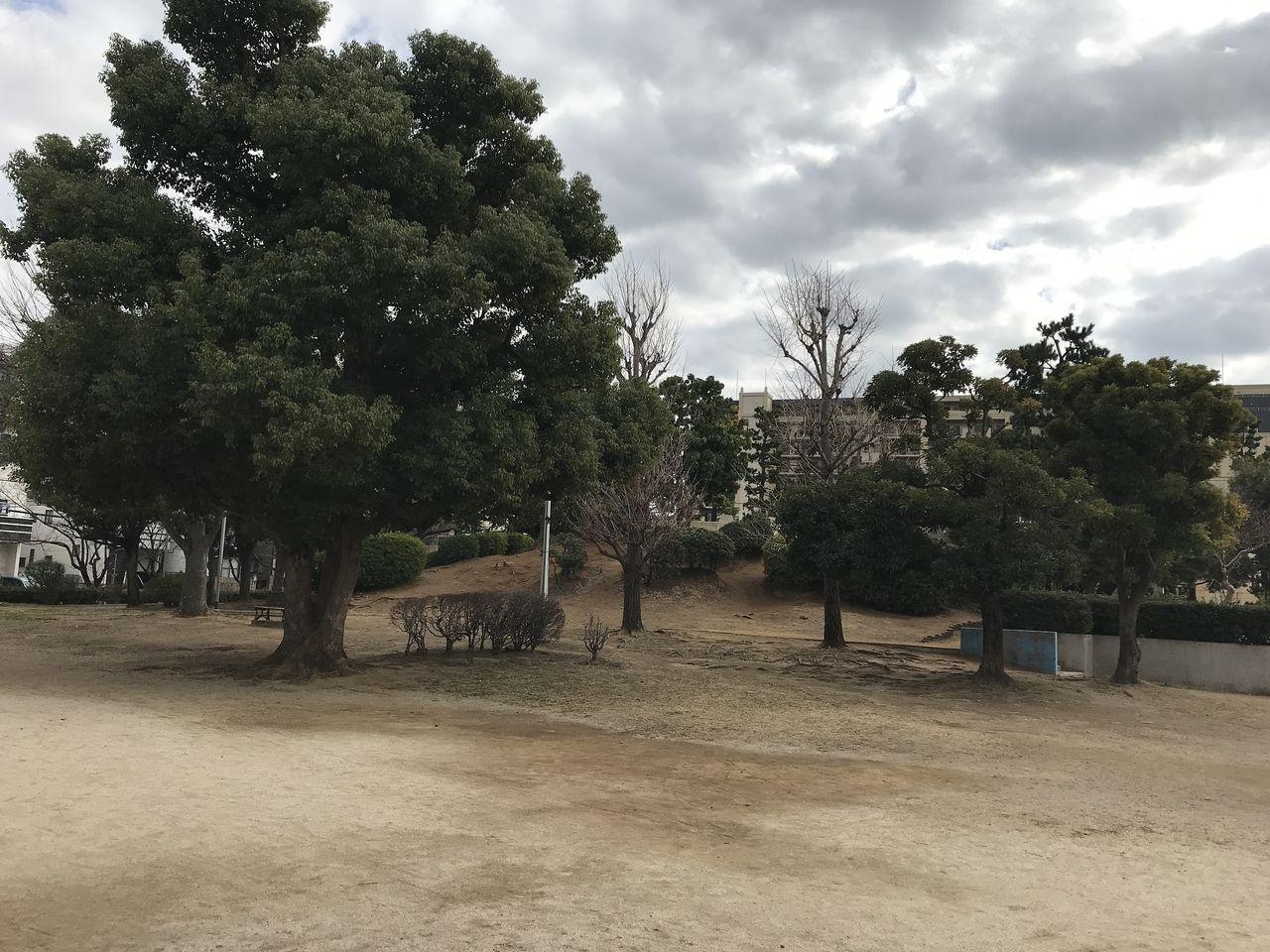 行徳の南部公園の木立
