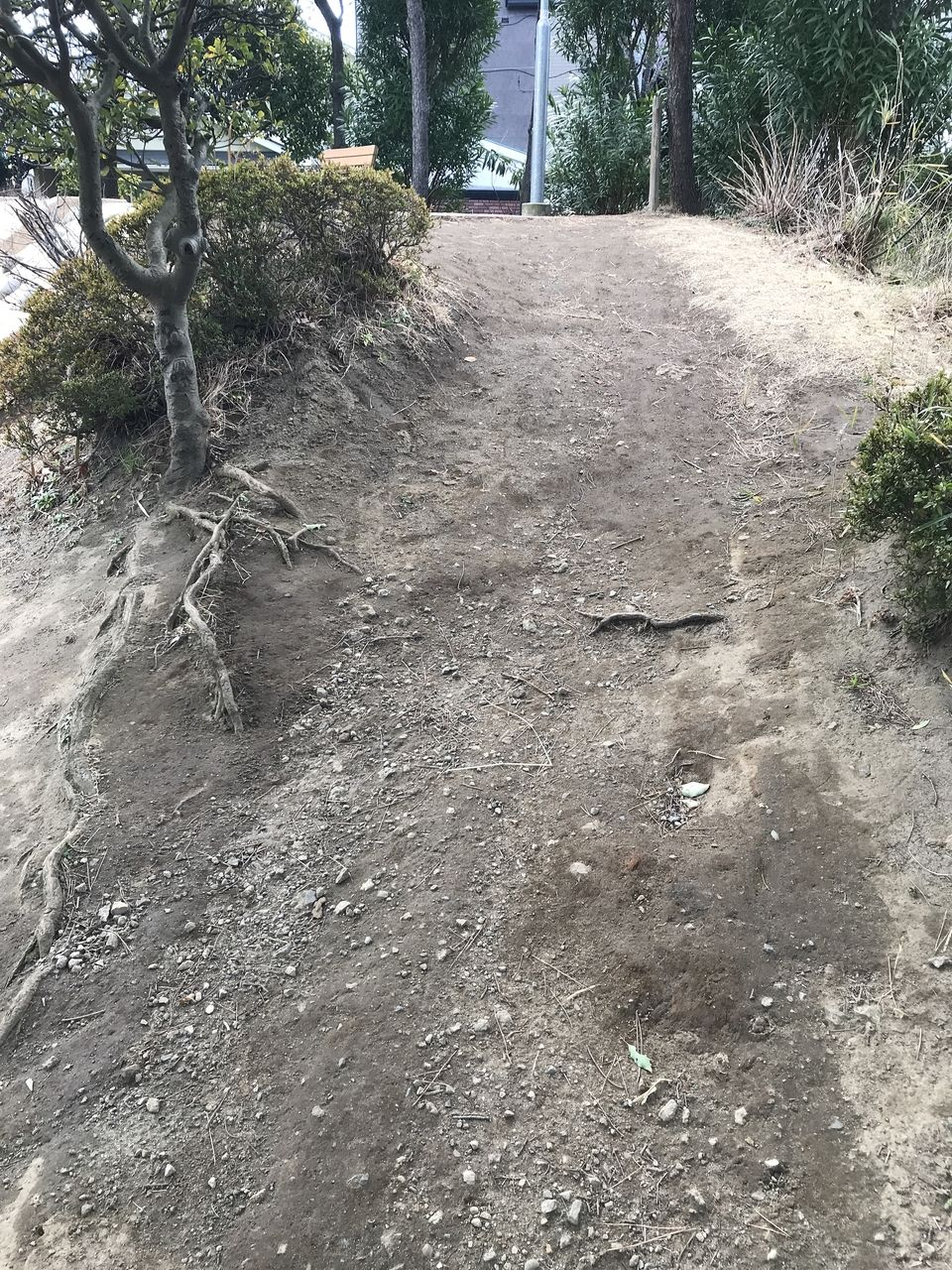 妙典のもっこく公園のすべり台への登り道