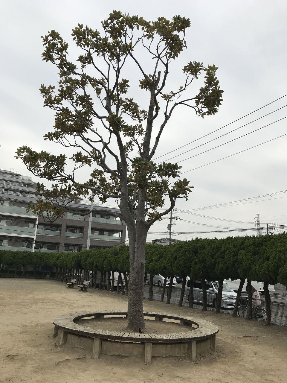 行徳の南場公園の中央にある木