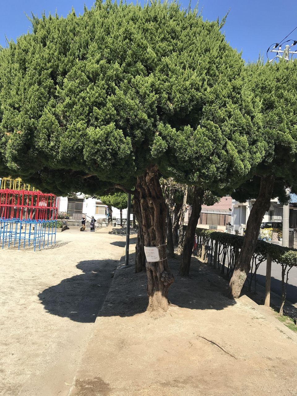 南行徳の香取公園の周囲を囲む木