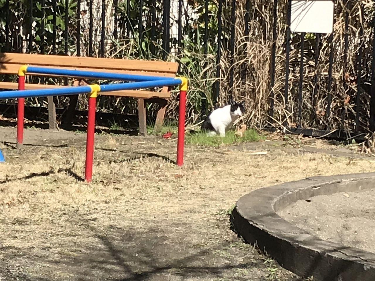南行徳のあじさい公園の猫