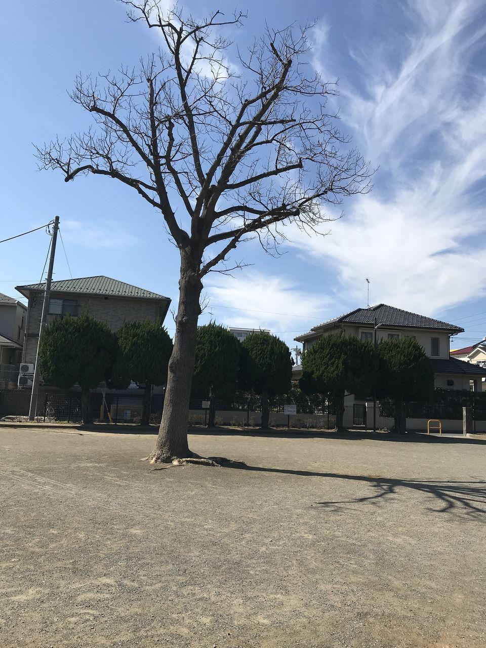 南行徳の相之川公園の広場の中央の木