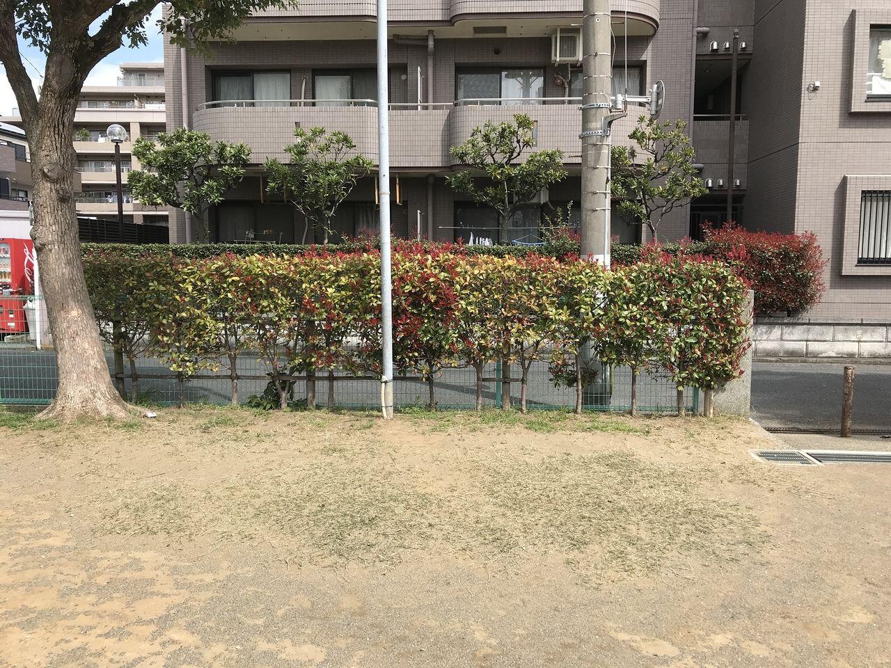 南行徳の湊新田公園周辺の生垣