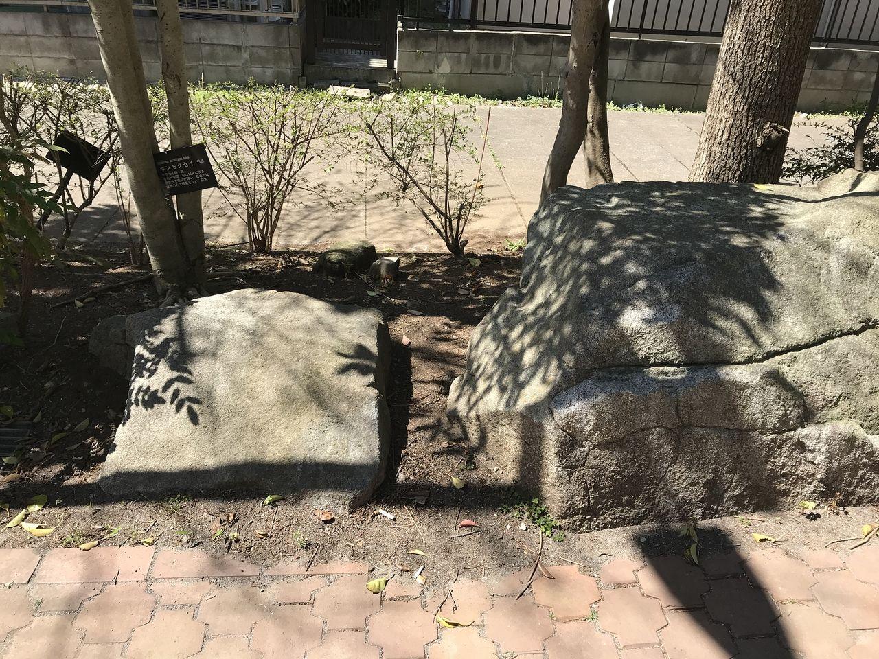 行徳の福栄緑道の歩道の左横の石