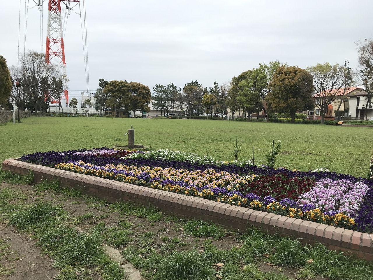南行徳の東海面公園のグランド内の花壇