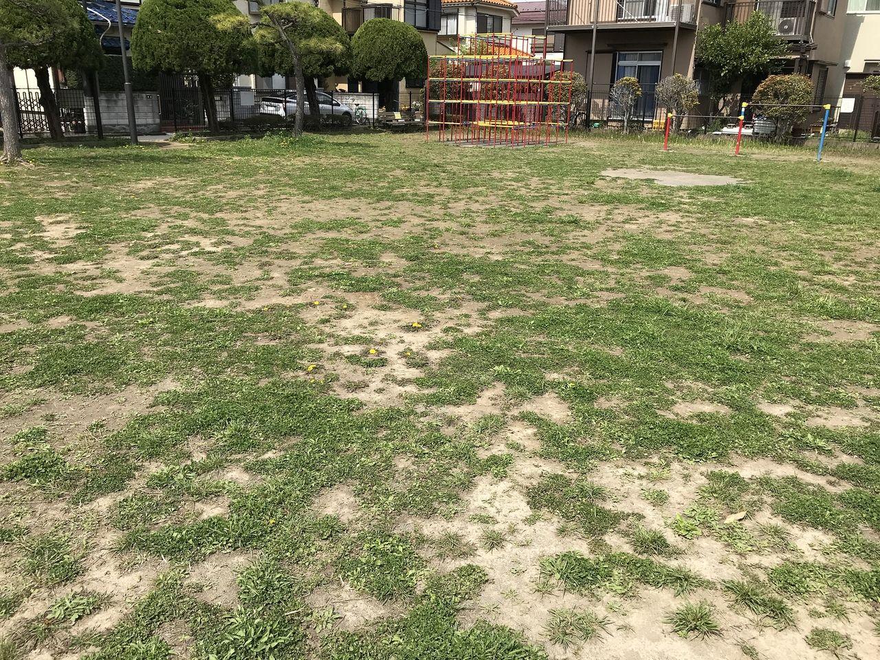 南行徳の千鳥公園の広場