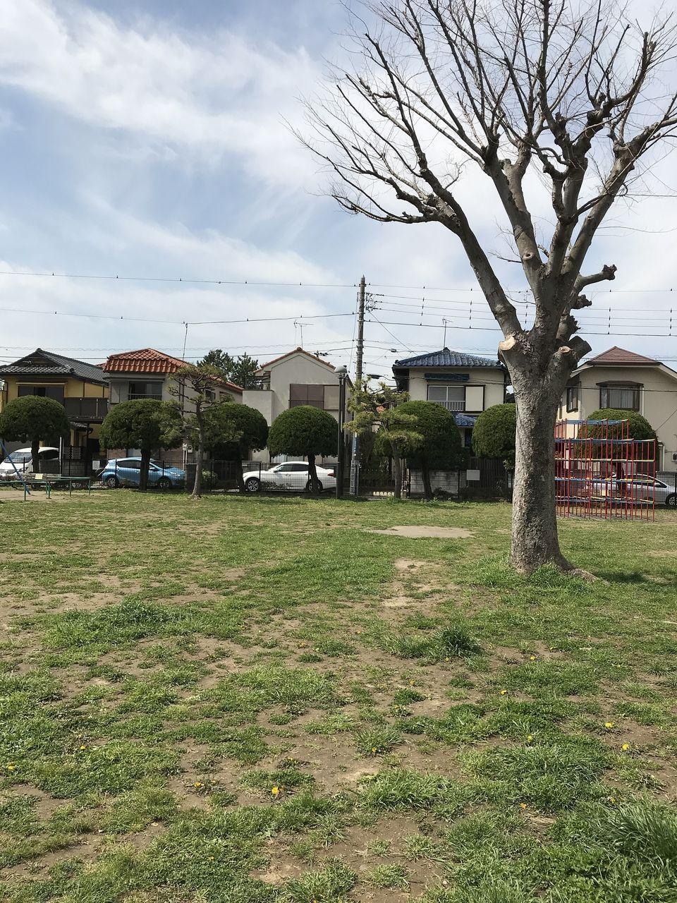 南行徳の千鳥公園の広場の木