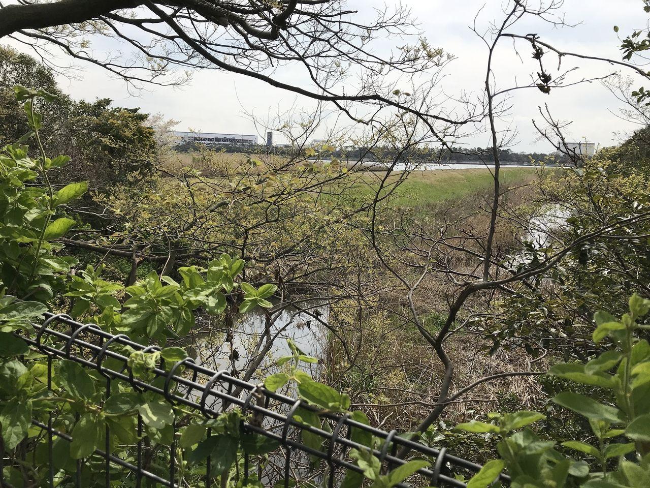 南行徳の白鷺公園の裏の川