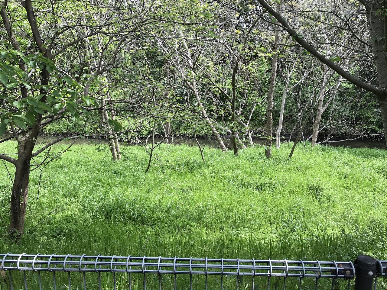 南行徳の白鷺公園の裏の湿地林