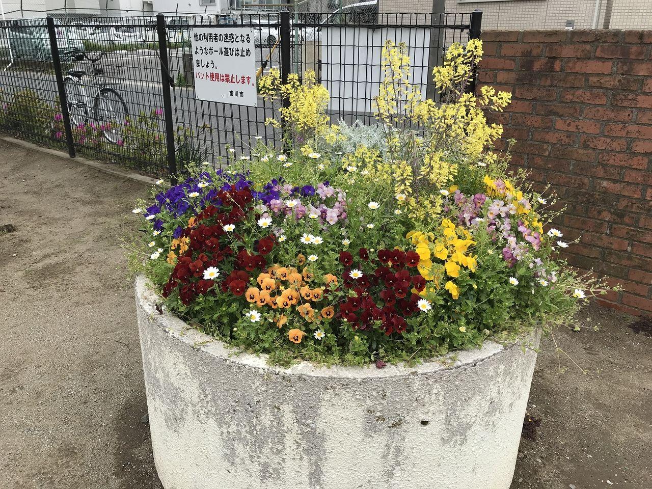 南行徳の新浜公園の入口の花