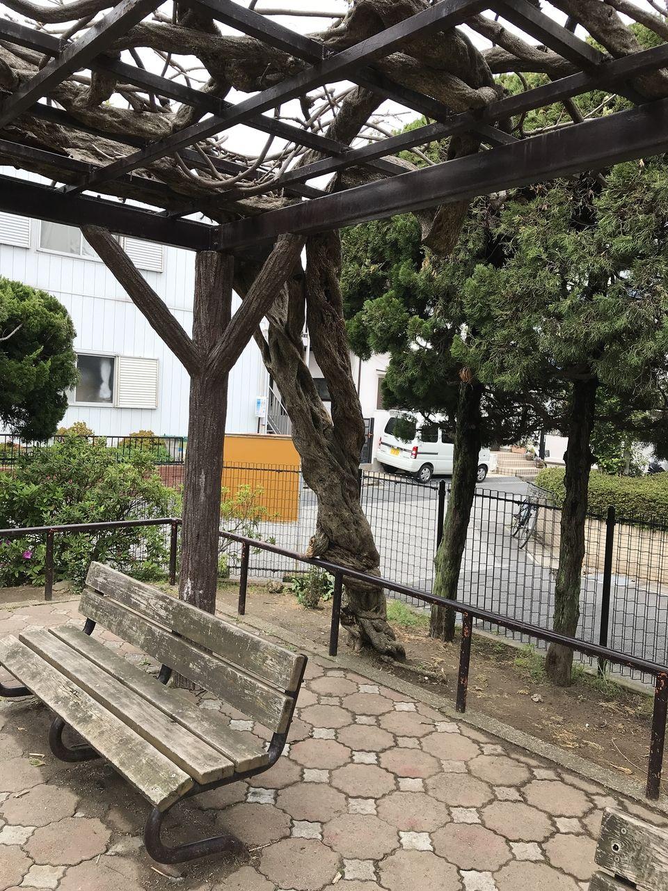 南行徳の新浜公園の藤棚の木