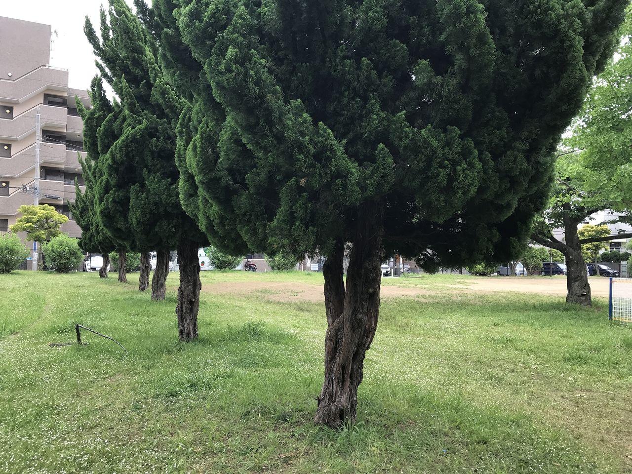 行徳のモエる公園?「押切公園」