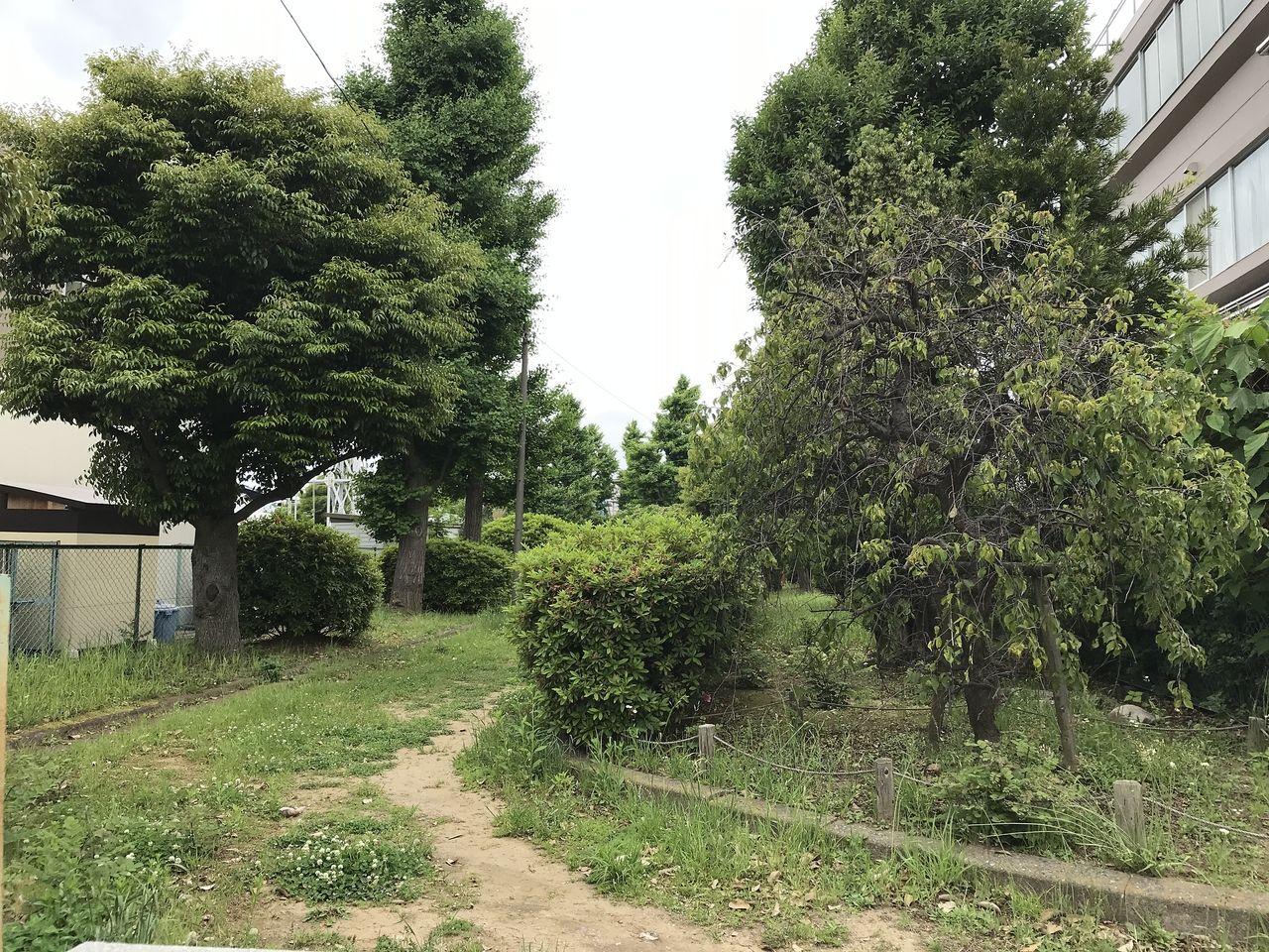 行徳の行徳児童公園の道