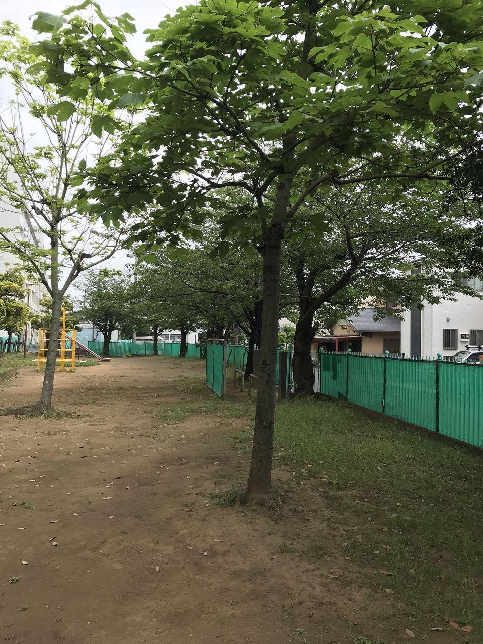 南行徳の相之川西公園の木